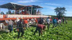 Trabajadores agrícolas en Quebec