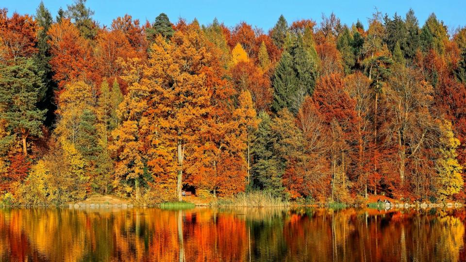 Arboles de otoño en Canadá