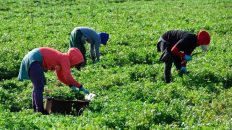 inspectores granjas agrícolas Ontario