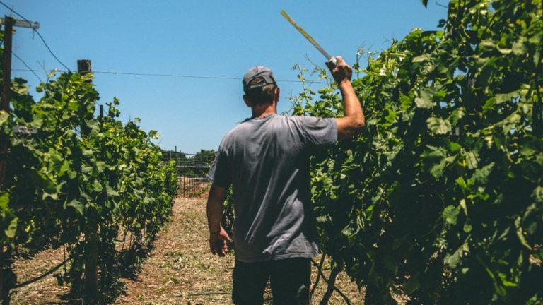 Vacunación trabajadores agrícolas Ontario