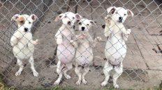 adopción perros Canadá México